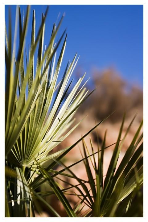 Utah Horticulture