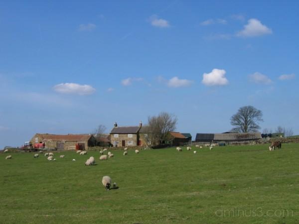 Highcliffe Farm, North Yorkshire Moors