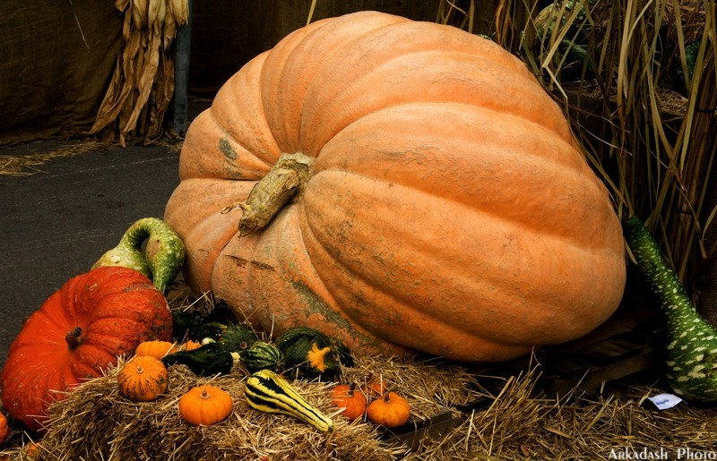 Pumpkin Festival (1/5)