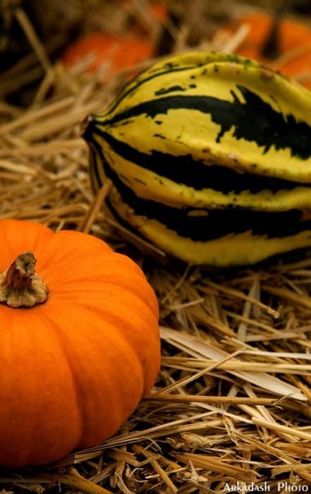 Pumpkin Festival (4/5)