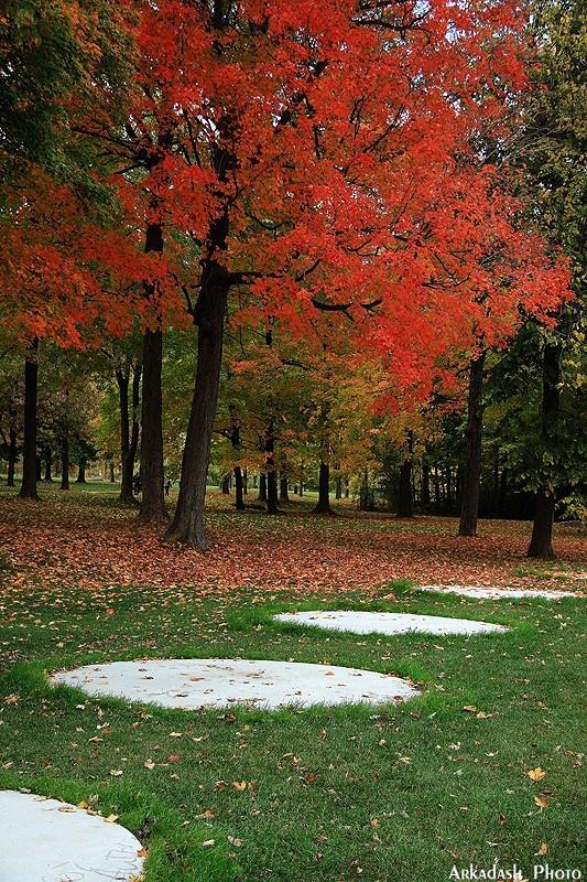 Remembering Fall #6