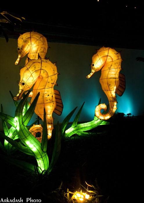 Chinese Lanterns #6