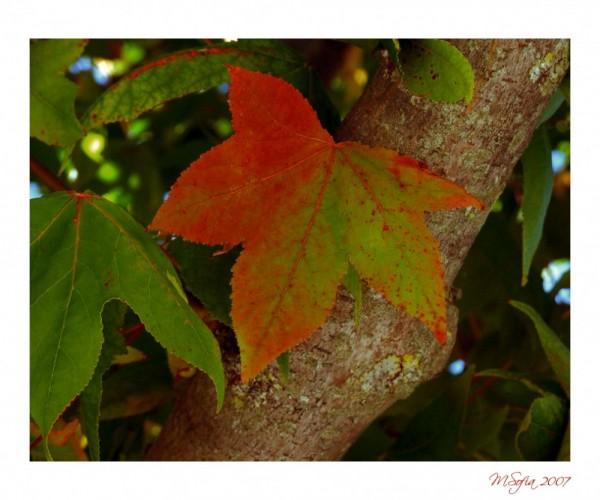 O Outono vem ou não? - Autumn is it coming or not?