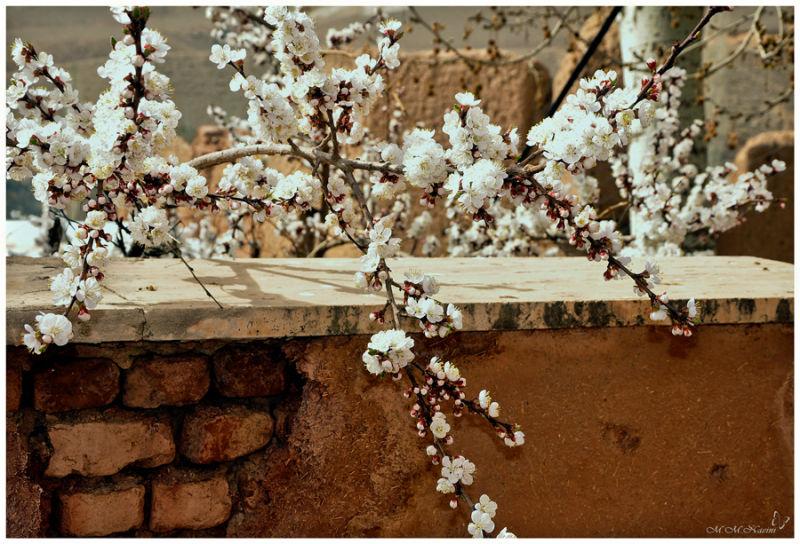 Hi ... spring !!!