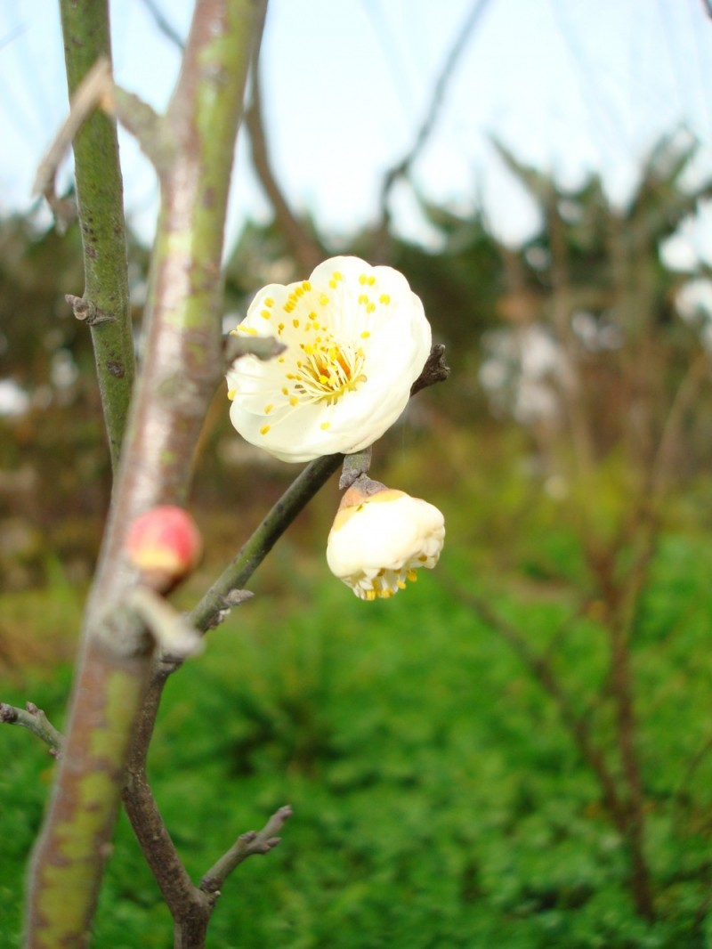 China Sichuan Trip Flower Series (1)
