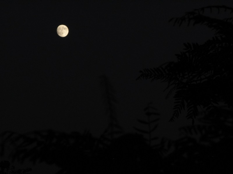 Moon branch