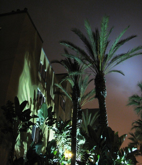 Night palm shadows on Ocean Blvd Long Beach