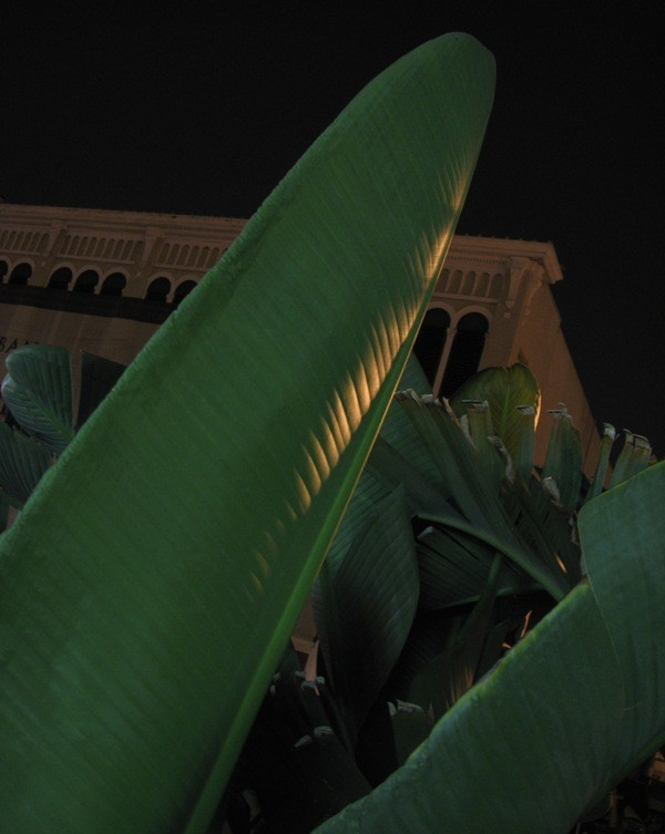 Palm frond close-up at night