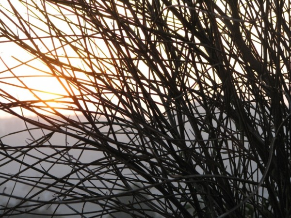 sunset behind a bush in hollywood hills