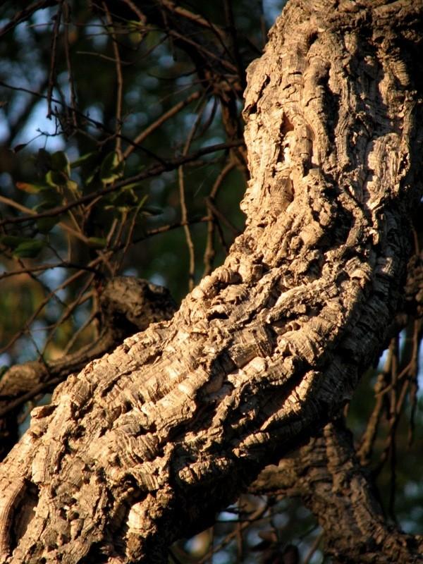 gnarly tree branch