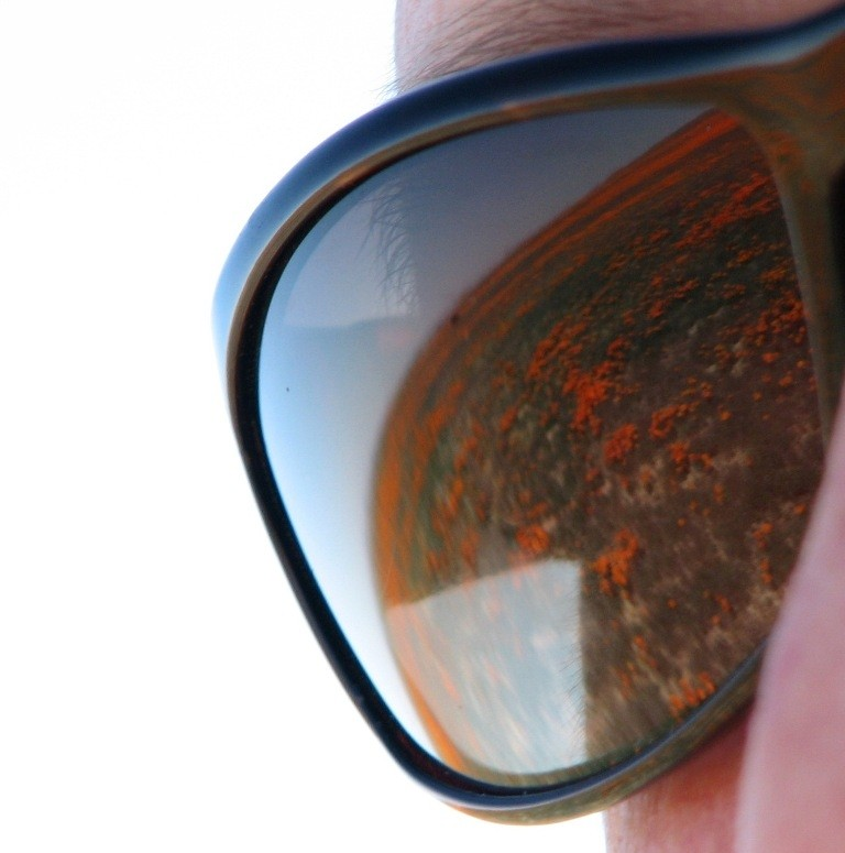 poppies reflected off sunglasses