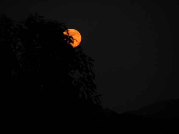 lunar eclipse behind trees in malibu canyon