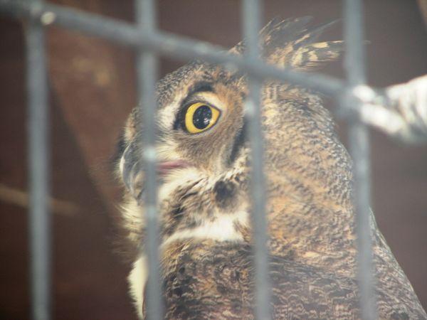 owl at living desert zoo and gardens