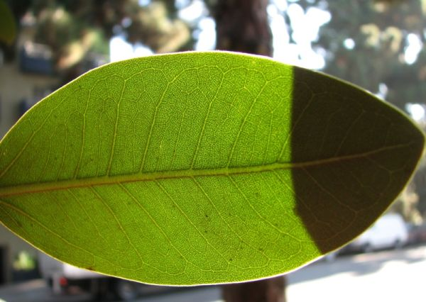 close-up of leaf with shadows of other leaves