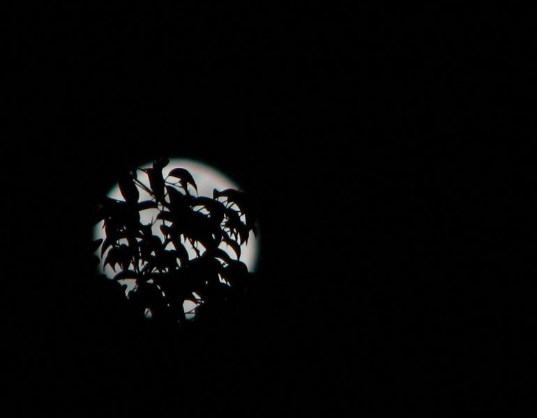 moon with leaf silhouettes