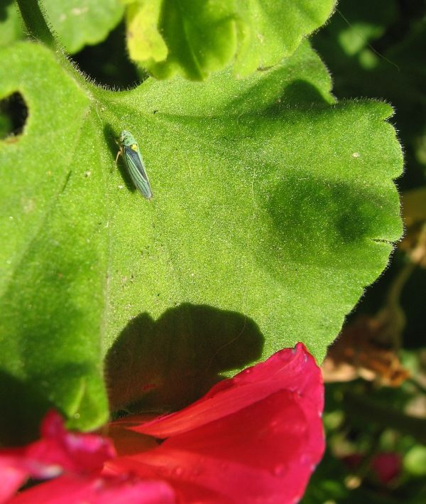small blue insect on green leaf