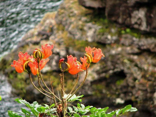 plant near rainbow falls hawaii
