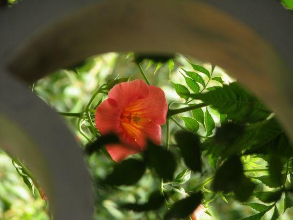 flower at portland chinese garden