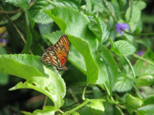 Butterfly on Pipiwai trail