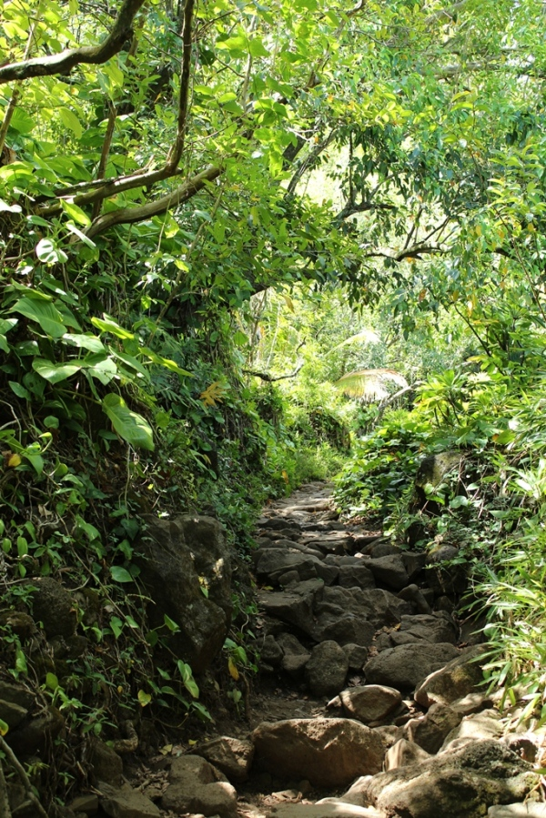 trail in kauai