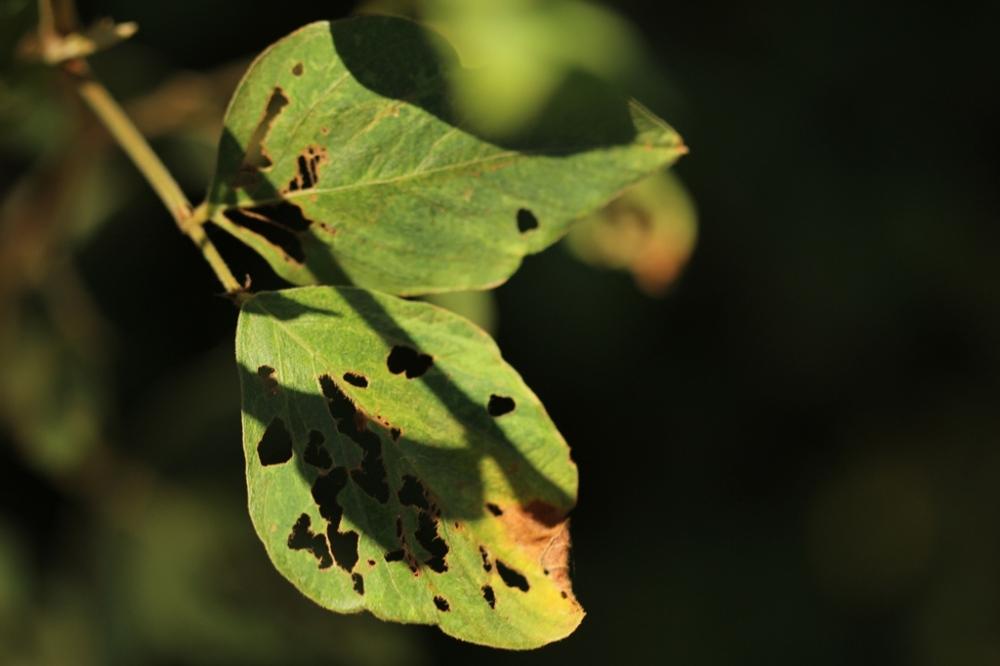 leaf on Kauai
