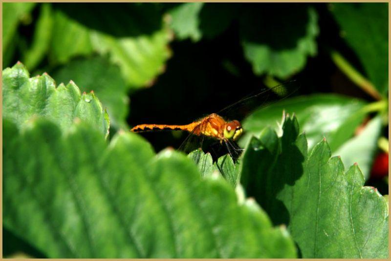 Dragon Fly Landing