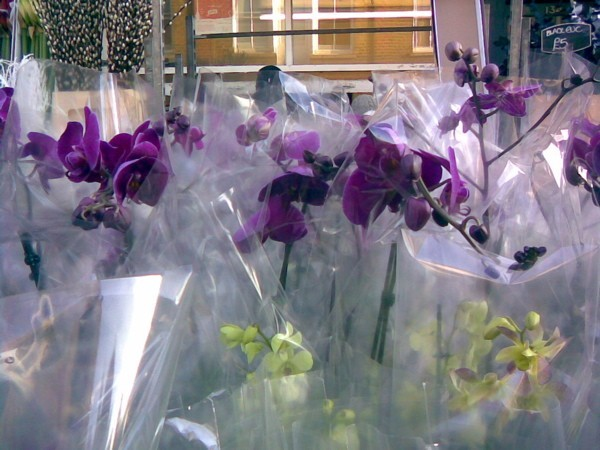 Orchids at Columbia Road Flower Market, London.