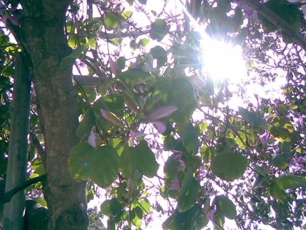 Spring, Virginia Av., Los Angeles.