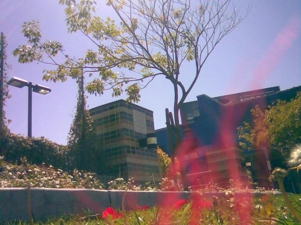 Outside the Edendale Branch of LA Public Library.