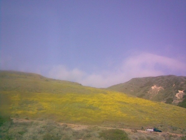 Ventura hillside, reminiscent of Kiarostami films.