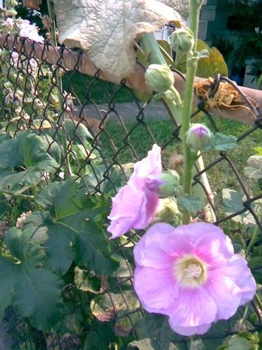 A blossom breaks through the property line.