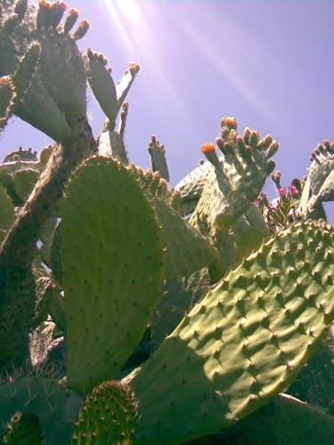 A cactus in the desert heat.