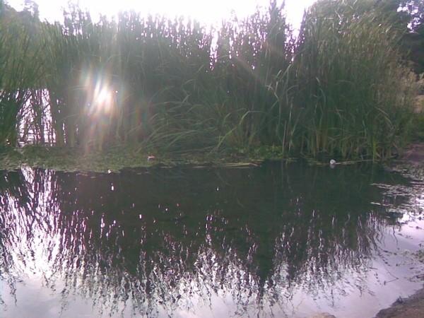 Taken at Lake Temescal, Oakland.
