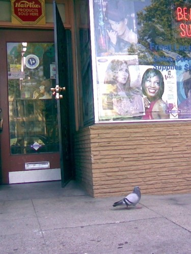 Bird walks by a beauty parlor in Oakland, Calif.