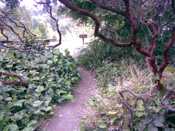 A clearing in the park around Lake Temescal.