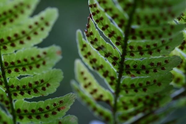Photo of a fern leaf.
