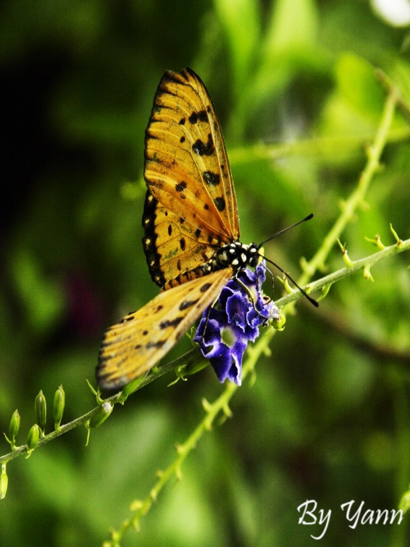Polka dots butterfly