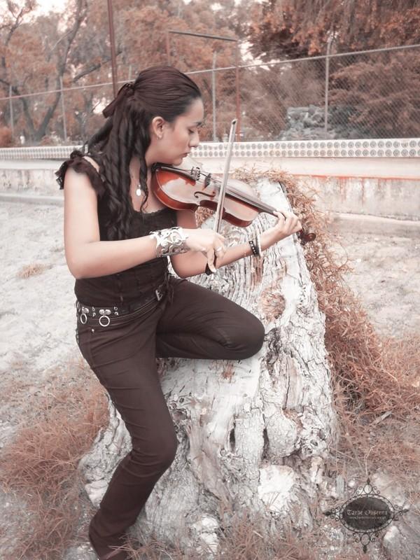 Violino,violinista,pedro roman,tarde obscura