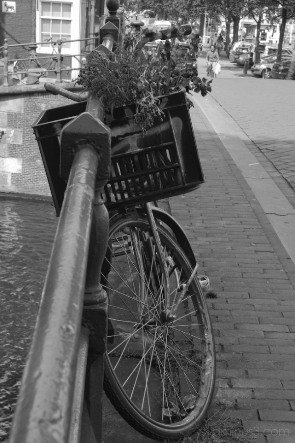 Old flowers on a Dutch bike in Amsterdam