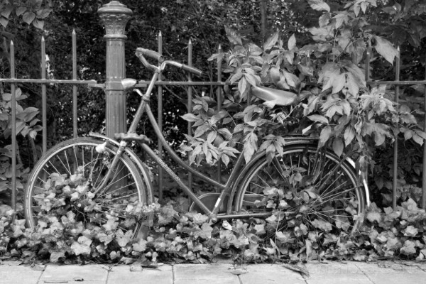 Overgrown bike in the city of Amsterdam