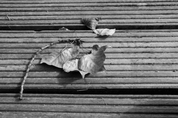 A leaf on the wooden deck in Amsterdam