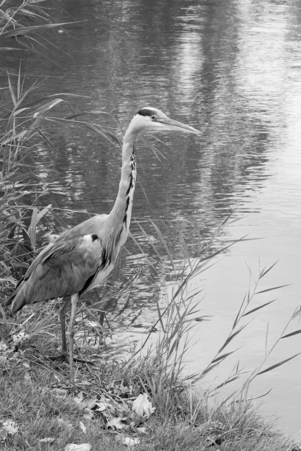 A bird fishing in vondelpark amsterdam