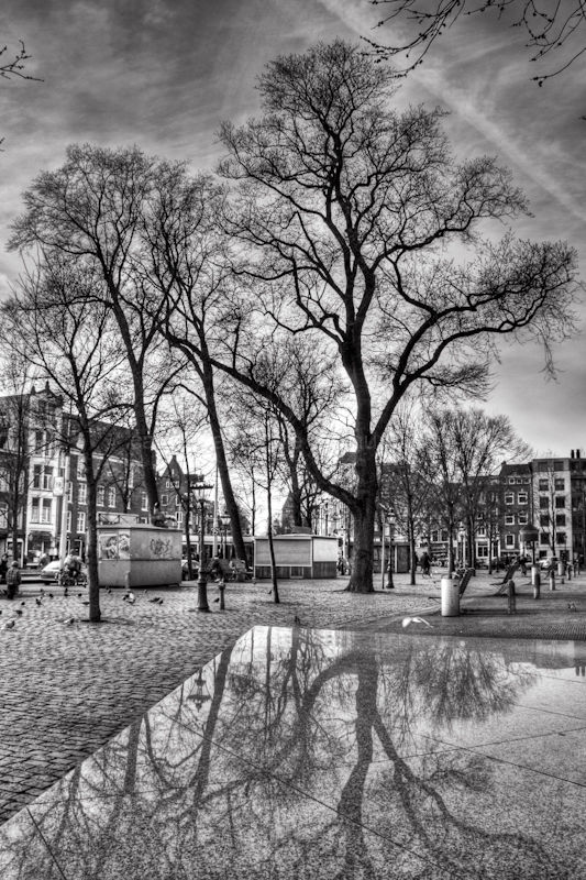 Trees and their reflections in the city