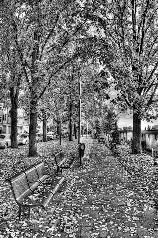 Path under the trees along the river Amstel