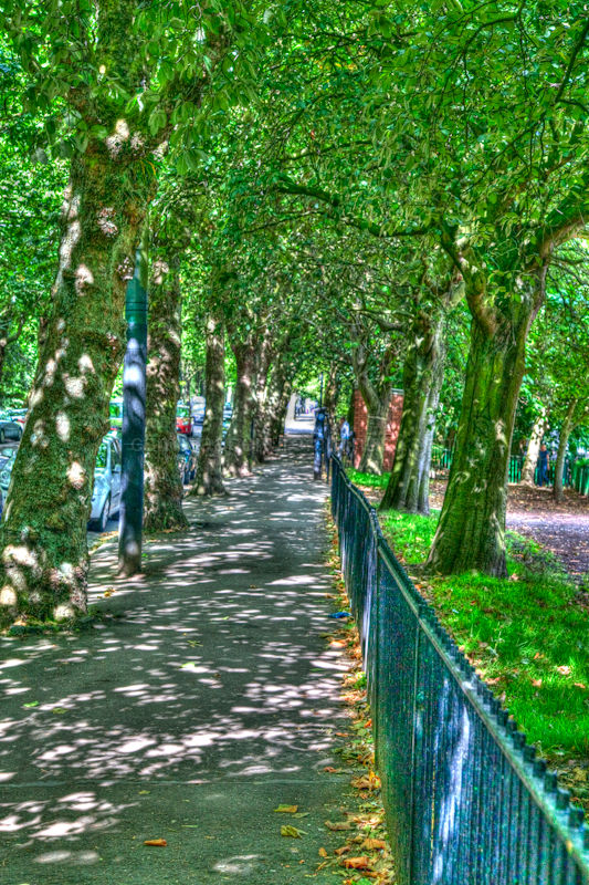 A path under the trees in kelvingrove park,