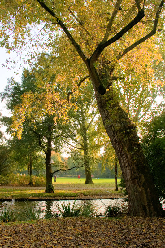 The park in sunny autumn day