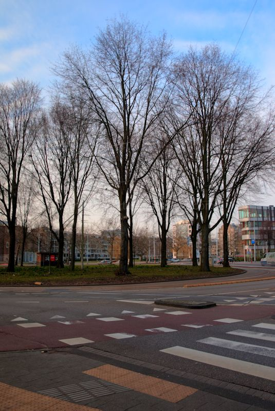 Trees in the roundabout for trams in Amsterdam