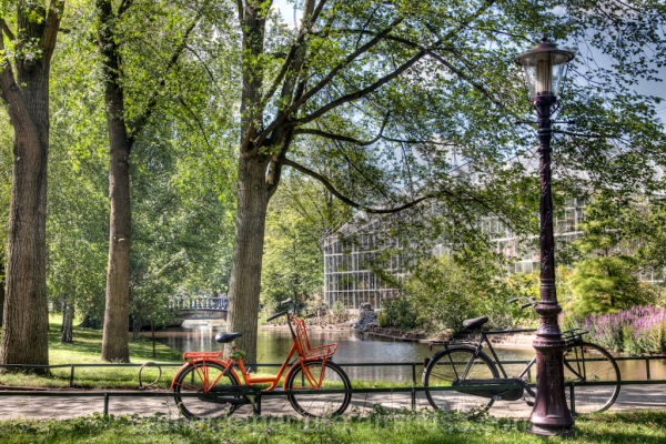 Two bikes in a small Amsterdam park