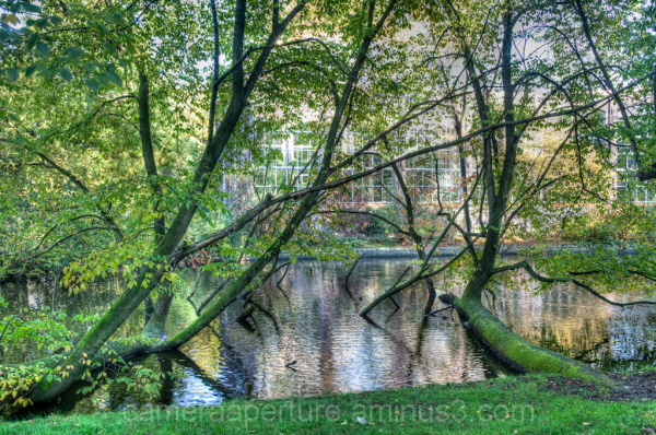 Trees in the water of an Amsterdam park.