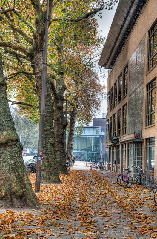 Trees a long a path in Autumn, Amsterdam